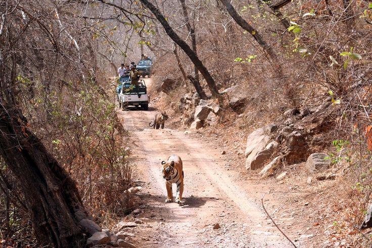 Sawai Madhopur Incredible India tours @ www.tajvoyages.com.au