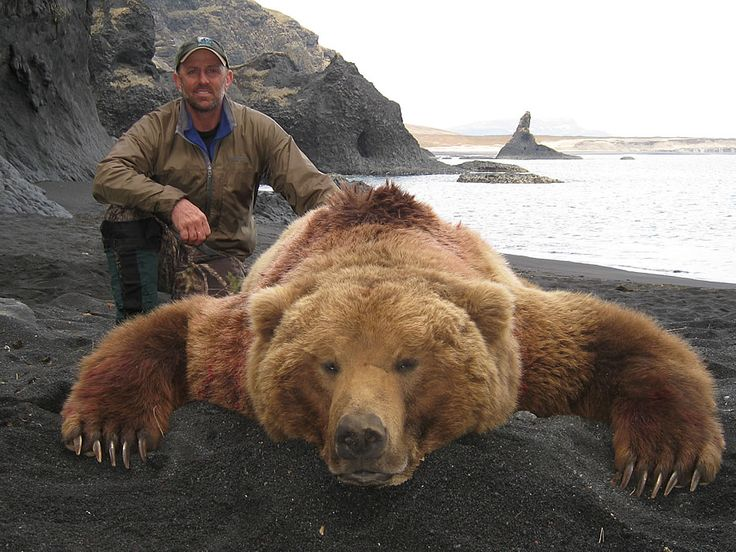 298 best bear hunting images on pinterest archery hunting awesome for a bear rug killing an animal your not going to eat is a sign of pleasure kill just another person publicscrutiny Choice Image
