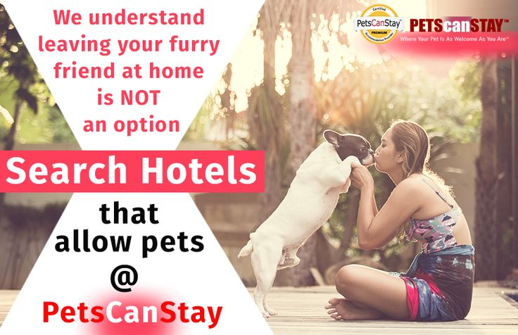 We understand leaving your furry friend at home is NOT an option Search hotels that allow pets @    Pets Can Stay