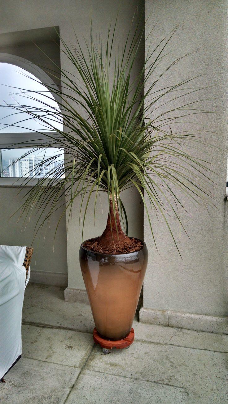 pata + cone cobre degrade