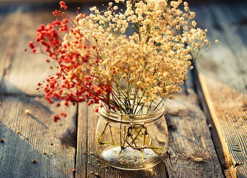 180 best Flores secas images on Pinterest Dry flowers, Flower - flores secas