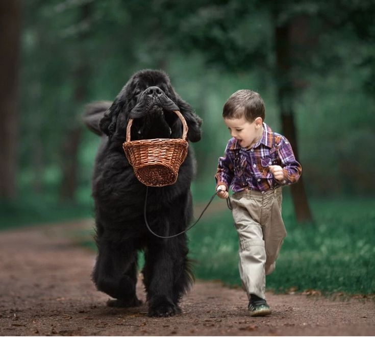 "A tisket, a tasket, this Newfoundland and his basket are featured in the upcoming book ""Little Kids and Their Big Dogs"" by beloved photographer Andy Seliverstoff. Click to preorder at https://revodanapublishing.com/books/little-kids-big-dogs/"