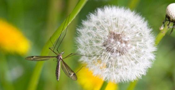 salute & benessere 10 modi per diventare invisibili per le zanzare