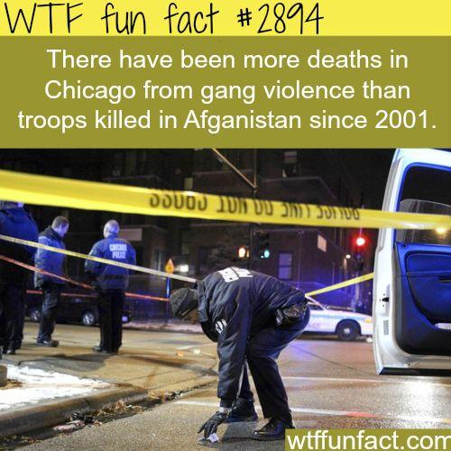 Chicago gang violence -  WTF fun facts ...so sad!