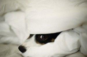 El cachorro miedoso