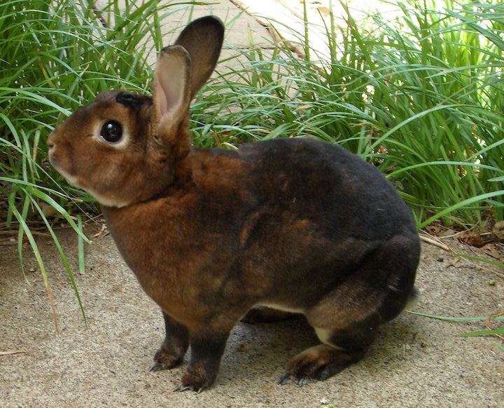 8 of the Best Pet Rabbit Breeds
