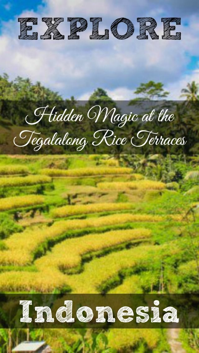Discover the Hidden Magic at the Tegalalong Rice Terraces