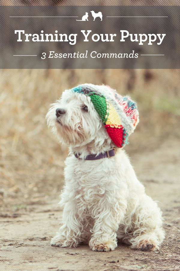 Training Your Puppy: 3 Essential Commands