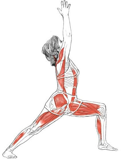 Warrior Pose  Virabhadra : the name of a fierce mythical warrior, Strengthens the legs, opens the chest and shoulders