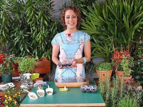 Truque da horta: semeie na caixinha de ovo!