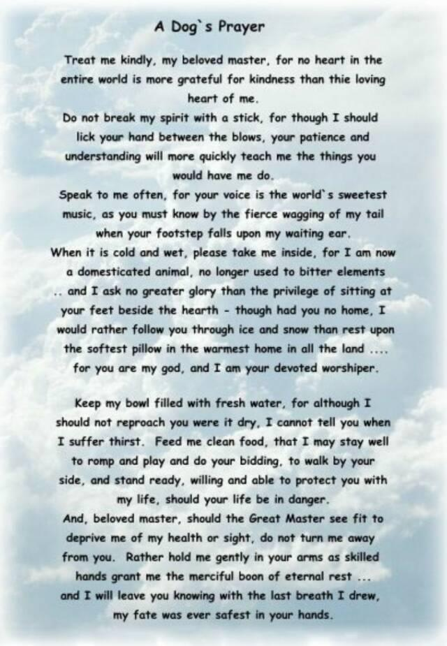 A dog's prayer- makes me want to cry. I love my dogs soo much!!