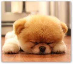 Sleeping Boo
