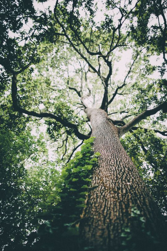 """Compared with me, a tree is immortal..."" ― Sylvia Plath, ""I Am Vertical,"" The Collected Poems"
