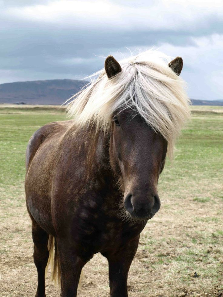 This looks like my dapple gray Shetland pony named Jake. I had him when I was 5. I named one of my sons after him❤️