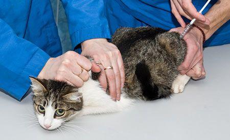 Haustierbesitzer sollten wissen, dass Impfungen die Gesundheit ihrer geliebten Tiere gefährden und gefährliche Nebenwirkungen - wie Verhaltensstörungen, Allergien, Arthritis, Krebs und im schlimmsten Fall den Tod - mit sich bringen können.