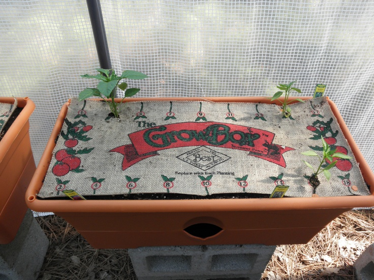 The GrowBox By The Garden Patch   These Are My Newly Potted Sweet Red Bell  Peppers