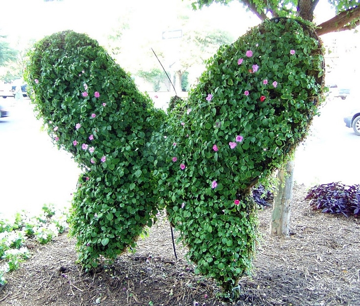 find this pin and more on garden misc by