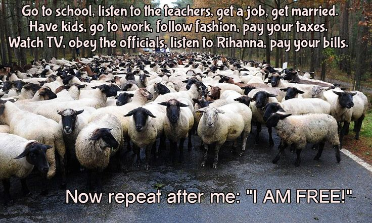 """Go to school, listen to the teachers, get a job, get married…"" very offensive quote – Anonymous - More at: http://quotespictures.net/22245/go-to-school-listen-to-the-teachers-get-a-job-get-married-very-offensive-quote-anonymous"