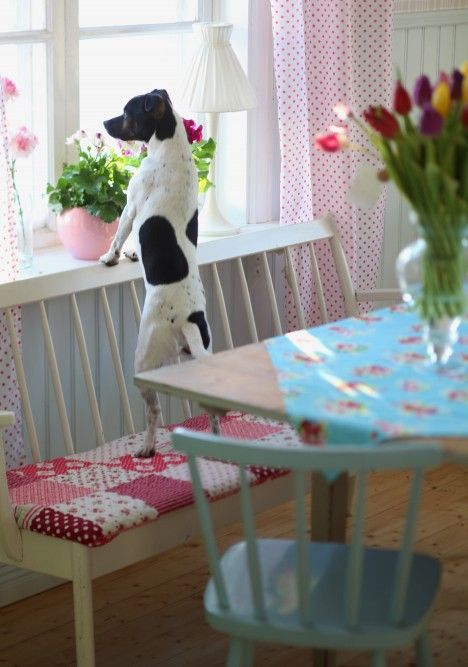 Adorable kitchen (and dog)