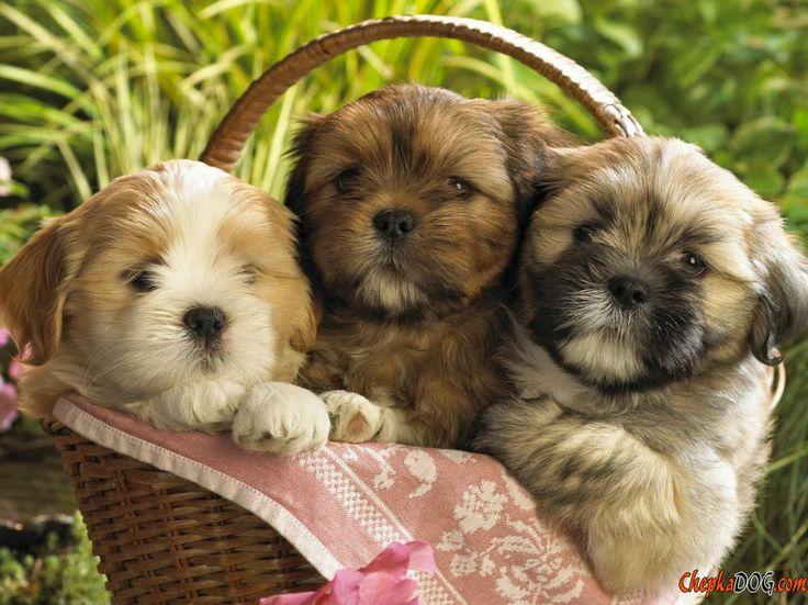 Fotos de filhotes de cachorro