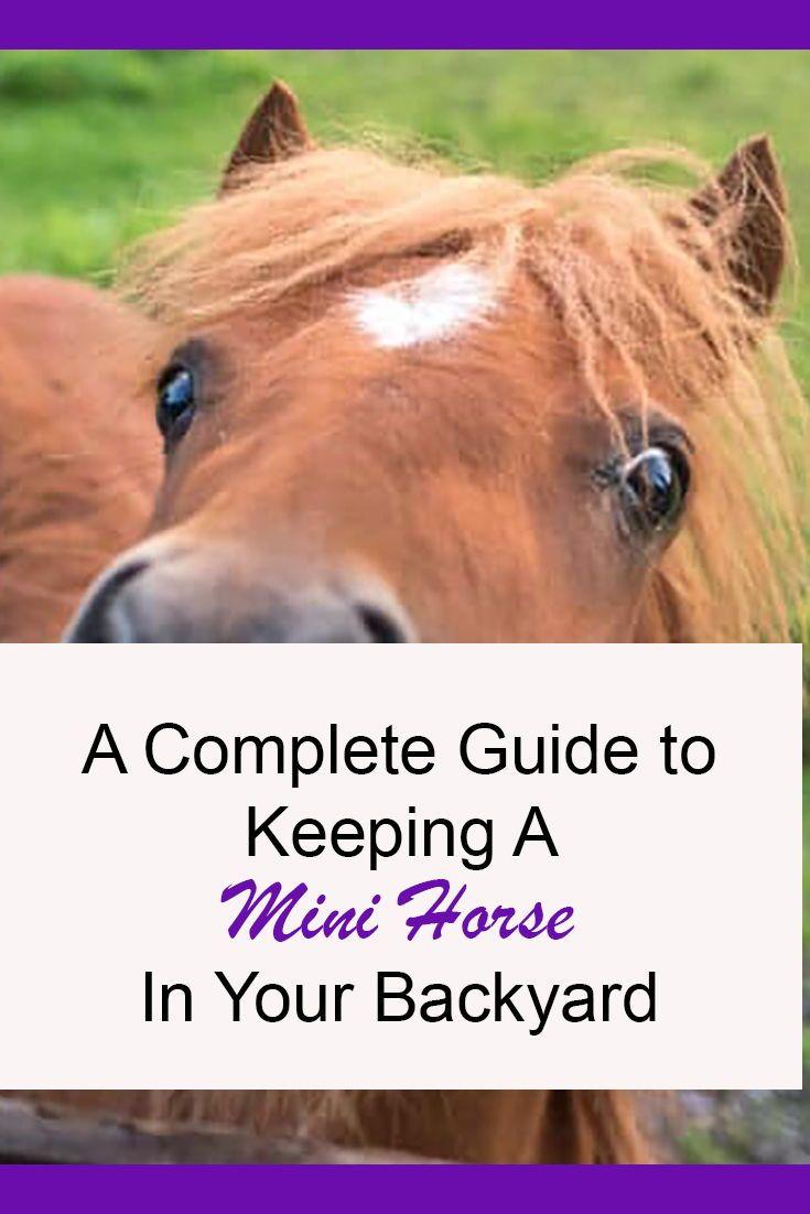 Keeping A Mini Horse In Your Backyard What You Need To Know 2021 Mini Horse Mini Horse Barn Horses Mini horse in my backyard