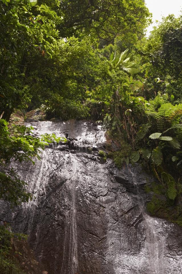 el bosque (lluvioso)