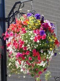 colourful hanging basket