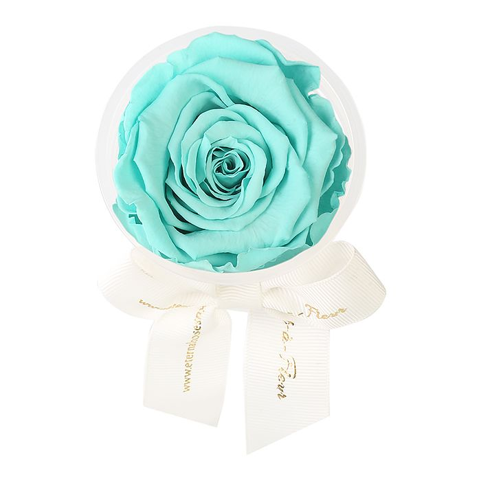 The hit The Roses and Teal