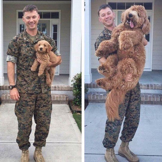 """""""Früher vs. Heute!"""" – Diese 14 Hunde sind immer noch so süß, wie am ersten Tag!"""