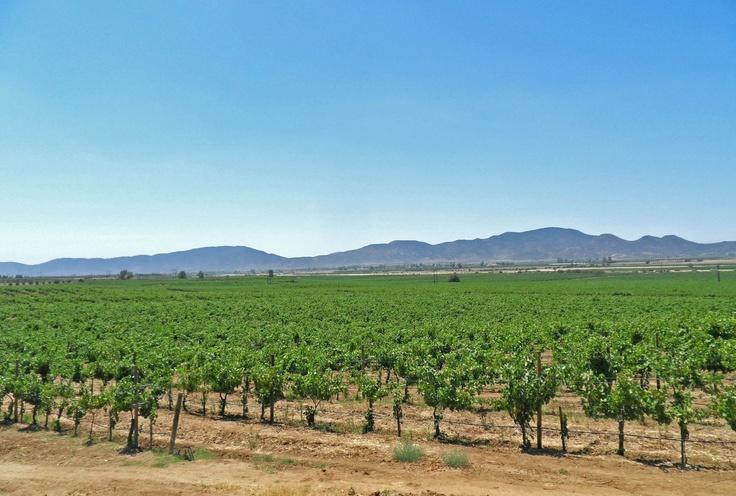 Guadalupe Valley- Ensenada's Wine Country #Baja