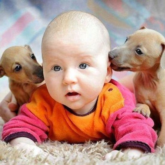 Adorable cute baby in between two cute dog puppies... click on picture to see more