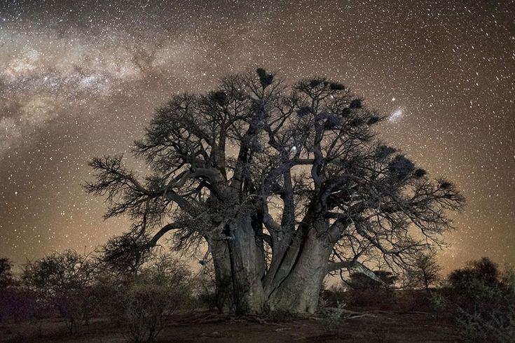 "Ancient trees affected by cosmic rays are the subject of The ""Diamond Nights"" project by San Francisco-based photographer Beth Moon"