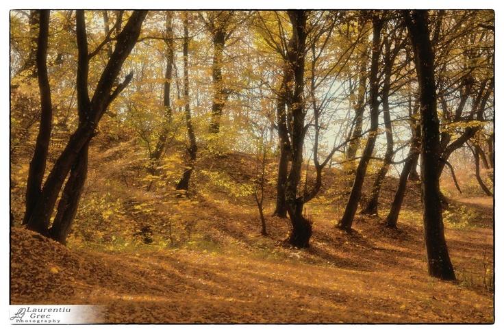 Padurea  Codrisor  - Bistrita  -noiembrie  2012
