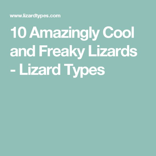 10 Amazingly Cool and Freaky Lizards - Lizard Types