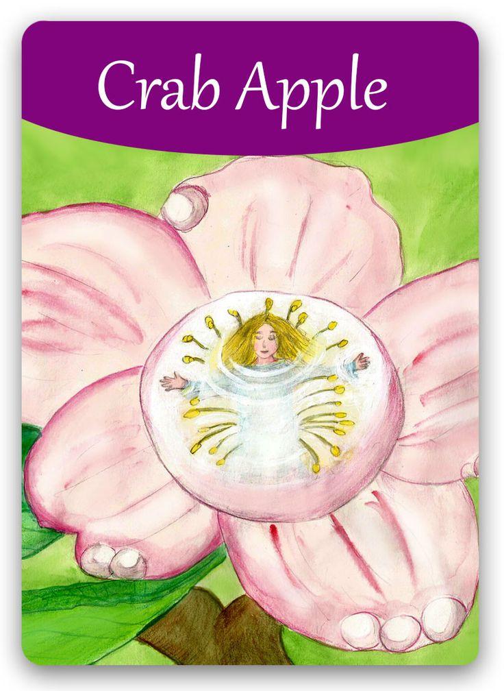 Yaban Elması çiçeği Öfke duyduğunuzda,aşırı hassaslık göstergeleri peydahlandığında kullanılan özel bir çiçektir.Acımasızca kendini eleştirmek,hataları kendinde aramak,sık baş dönmesi gibi ruhsal hallerde olma eğilimi gösterenler için harika bir şifa gücü.