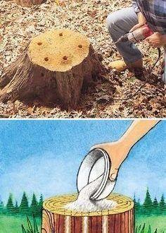 Baumstumpfentfernung Befreien Sie sich von Baumstümpfen, indem Sie Löcher in den Stumpf bo