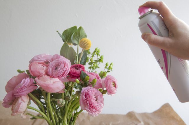 Once you pick a flower, it has an expiration date set on it. Although it is possible to prolong the look of fresh flowers, they inevitably will wither and discolor. However, there are a few tricks available to extend the beauty of the flower, including the use of hairspray. Hairspray helps hold the flower firm and prevents wilting for an additional...