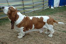 Columbo — Le chien;;;;
