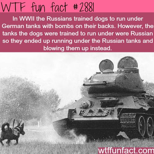 Dogs in World War Two -  WTF fun facts - seems only fair...