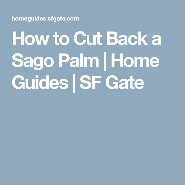 How to Cut Back a Sago Palm | Home Guides | SF Gate