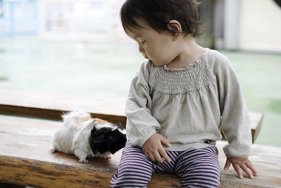 A recent study found that children with #autism engage in 55% more social behaviors hen interacting with animals rather than with toys. #parenting #specialneeds