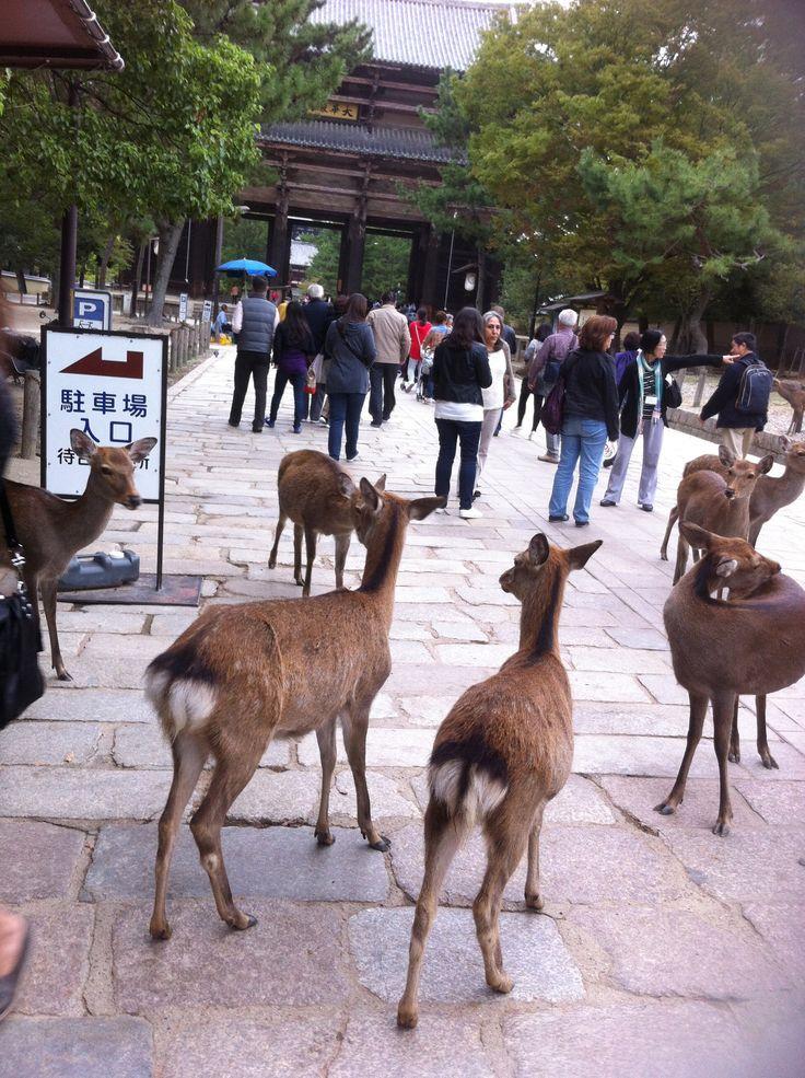 be careful! they can bite or kick... not joking... Nara, Japan