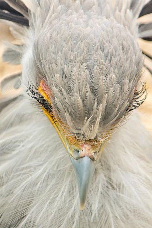 この鳥、完全に「火の鳥」だ:DDN JAPAN