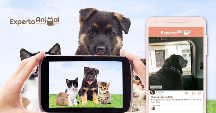 Experto Animal App es la comunidad para los amantes de las mascotas. Comparte consejos, dudas y todo lo que te apetezca con el resto de usuarios de ExpertoAnimal