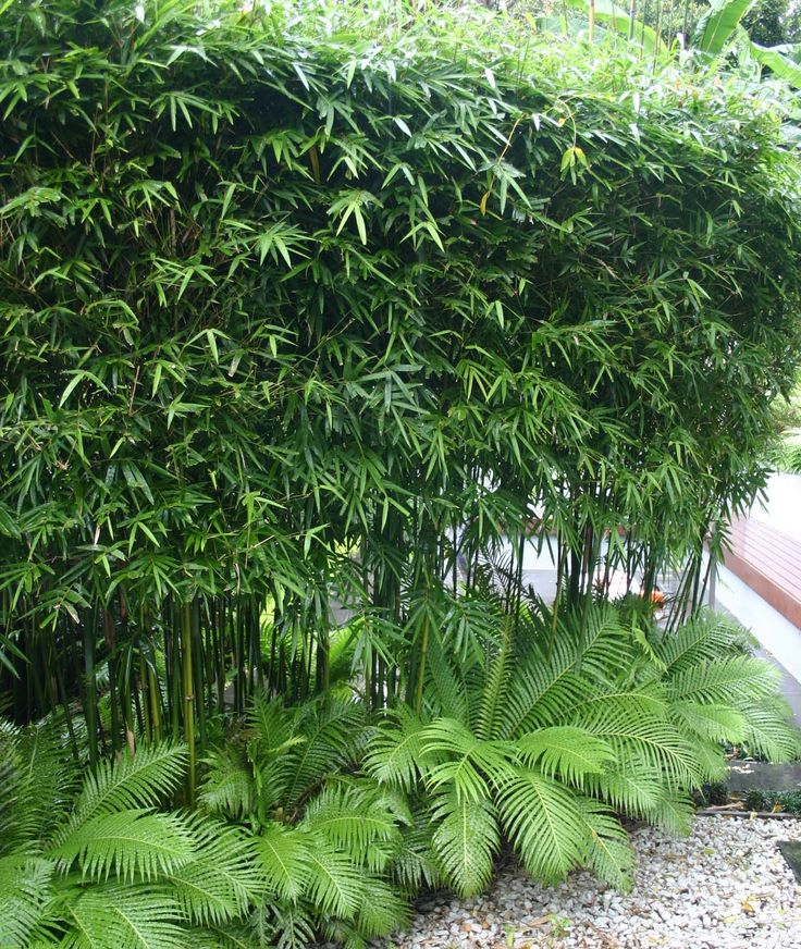 We like the little ferns at the bottom, to use along the side of the house Bamboo -Gracillis