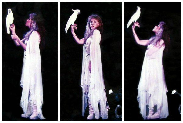 a super trio of photos of Stevie and her brother Chris's white cockatoo, Maxwellington ~ ☆♥❤♥☆ ~ these photos are part of a photo shoot for Stevie's debut solo studio album 'Bella Donna' which was released on July 27th, 1981 ~ photos taken by Herbert W. Worthington 111 ~ https://en.wikipedia.org/wiki/Bella_Donna_(album)