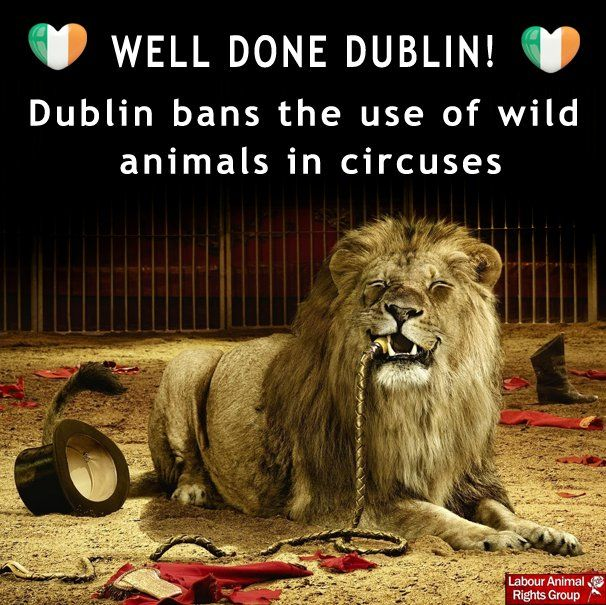 26 July 2016 http://www.dublinlive.ie/news/dublin-news/use-animals-circuses-banned-dublin-11663436