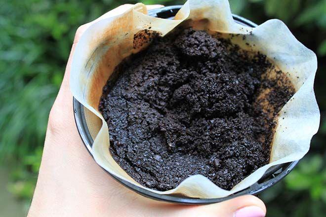 Notícias: Nunca mais deites as borras de café para o lixo! N...