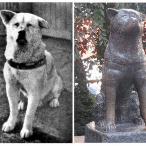 La storia del cane Hachikō, portata di recente anche sul grande schermo dal film Hachiko - Il tuo migliore amico, interpretato da Richard Gere, commuove il mondo intero da anni.