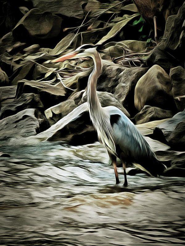 Great Blue Heron Art Print by Leslie Montgomery.